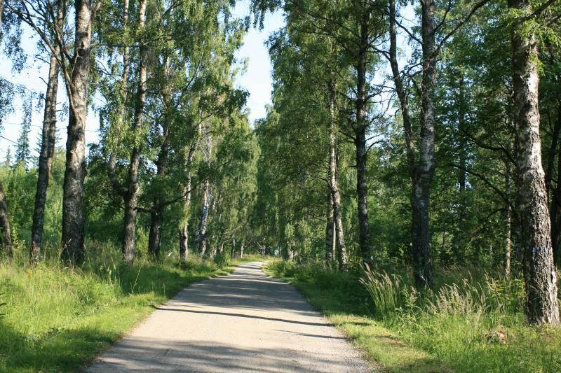 hakattu metsä hinta