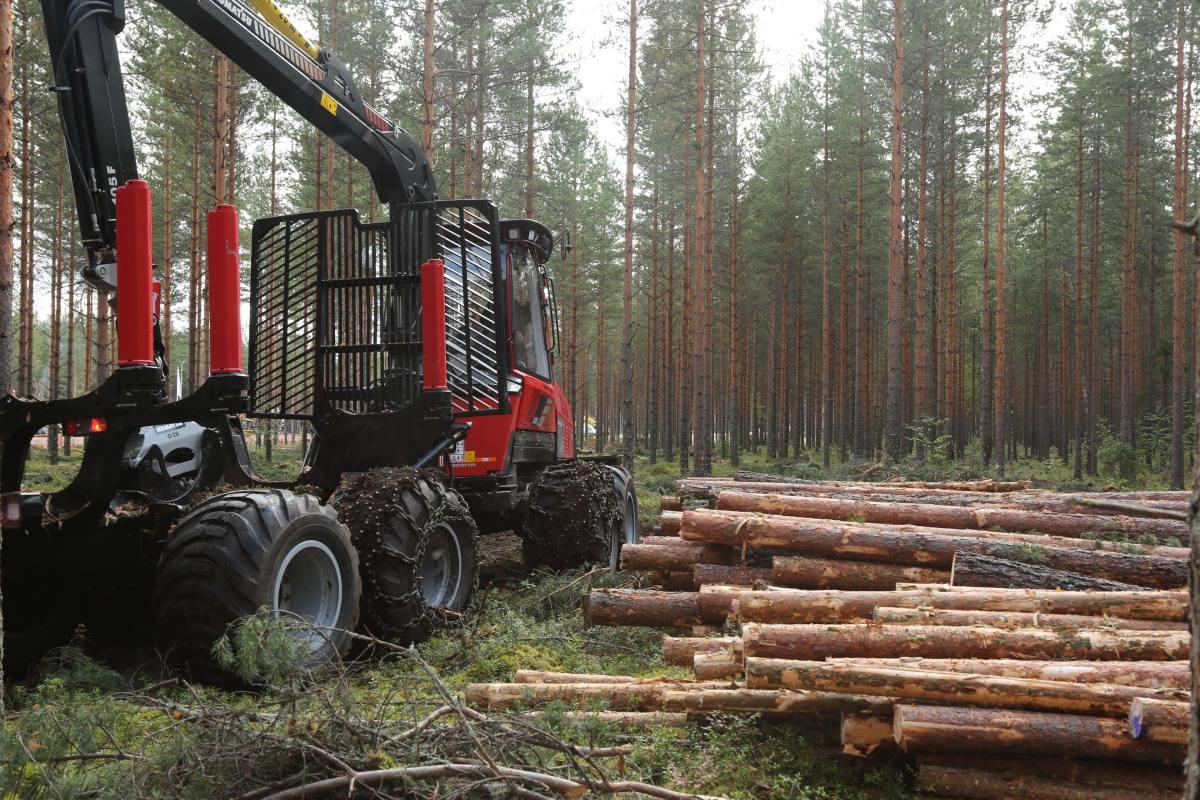 yhdestä puusta polttopuuta
