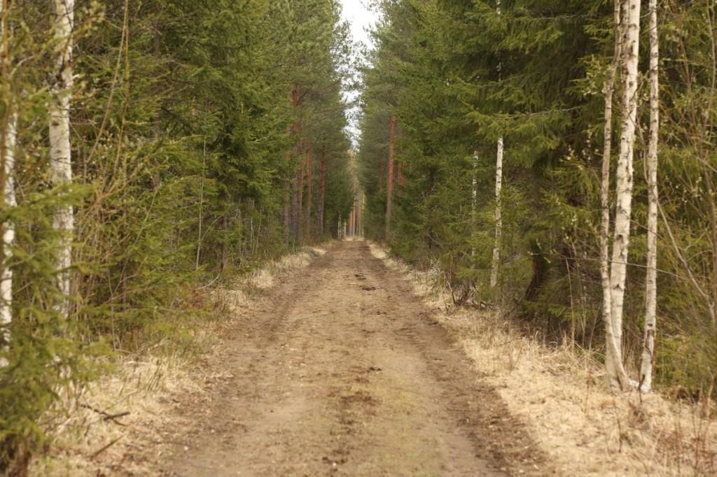 MetsatieIlmanMursketta