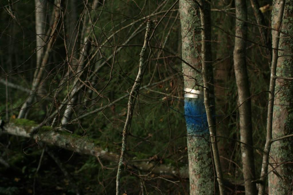 metsoalueenrajaus