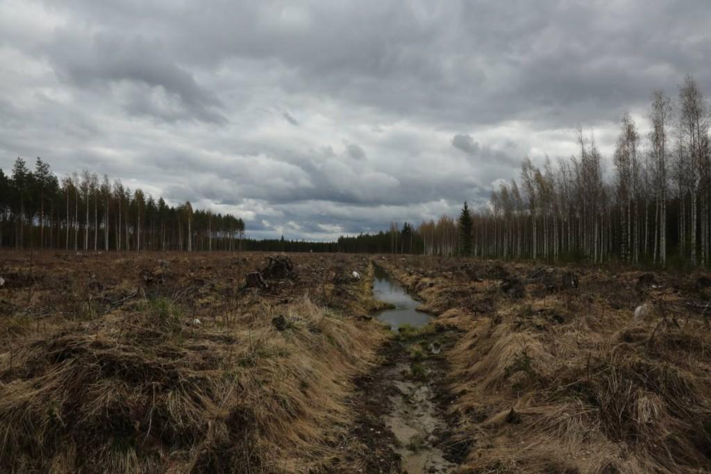 uudistushakkuu_metsäojitus
