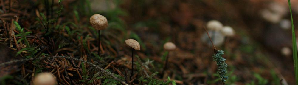 Puuntuottaja – raha on paras metsäneuvoja