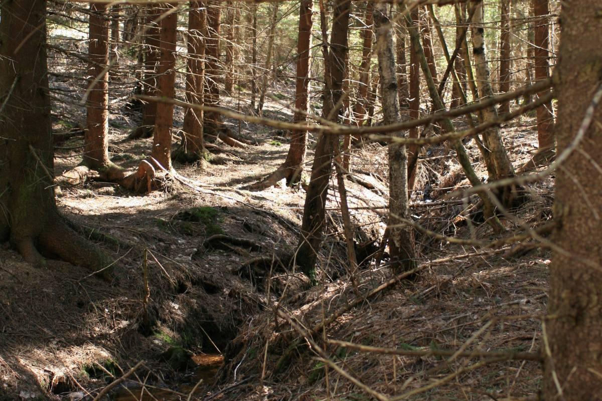 Kuolinpesän jakaminen metsätila